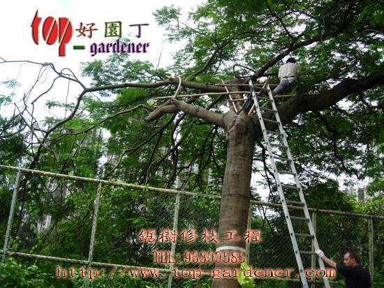 树木保养---锯树