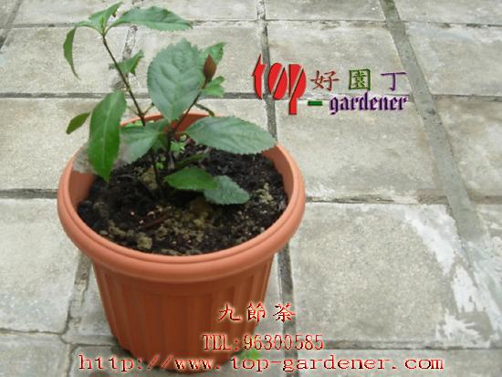 木雕竹节茶叶罐图片展示